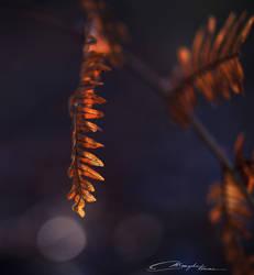 Dead fern in morning light
