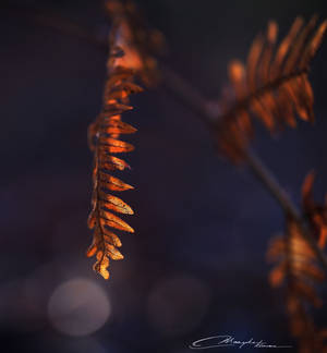 Dead fern in morning light