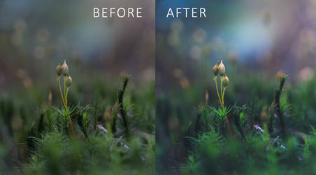 Sporelings: Free Tutorial with Lightroom Preset
