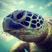 Catseye Beach Turtle close up