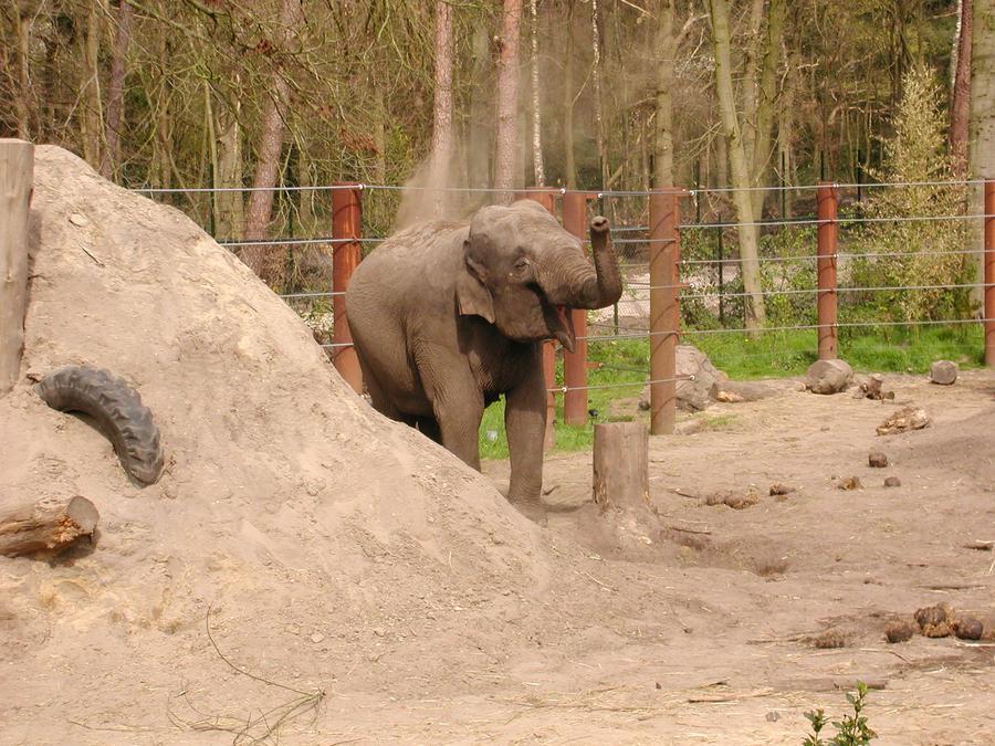 N F Elephant 2 Playing Elephant by Ho...