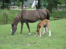 Mother with foal by Horselover60-Stock