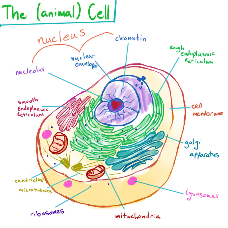 Botched bio animal cell pt1 the parts by supergal12000 on deviantart botched bio animal cell pt1 the parts by supergal12000 ccuart Images