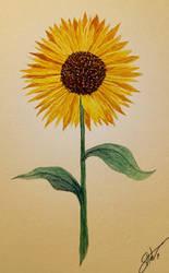 Sunflower by shunter071