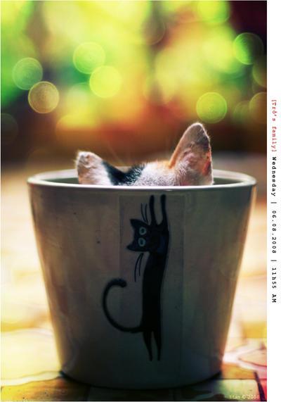 Kitten by Tottochan