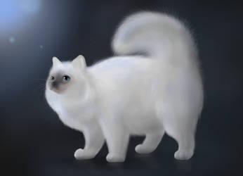 White Cat by Lizandre
