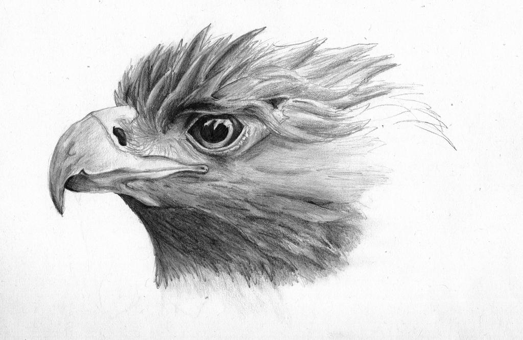 Golden eagle sketch by Lizandre on DeviantArt