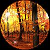 Golden trees by Lizandre