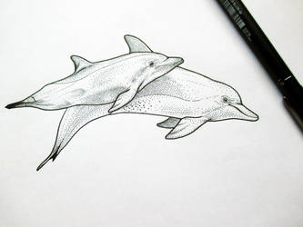 Dotty Dolphins by Lizandre