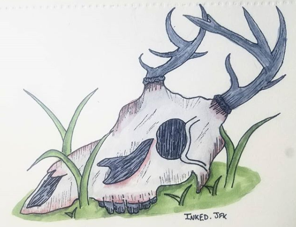 Line Drawing Deer : How to draw animals deer species and anatomy