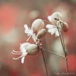 Bells by Lidija-Lolic