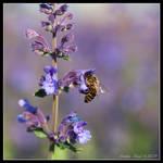 Violet paradise by Lidija-Lolic