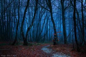 Lost by Lidija-Lolic