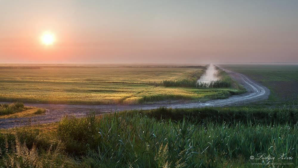 Early morning in Baranja by Lidija-Lolic