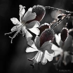 Good morning by Lidija-Lolic
