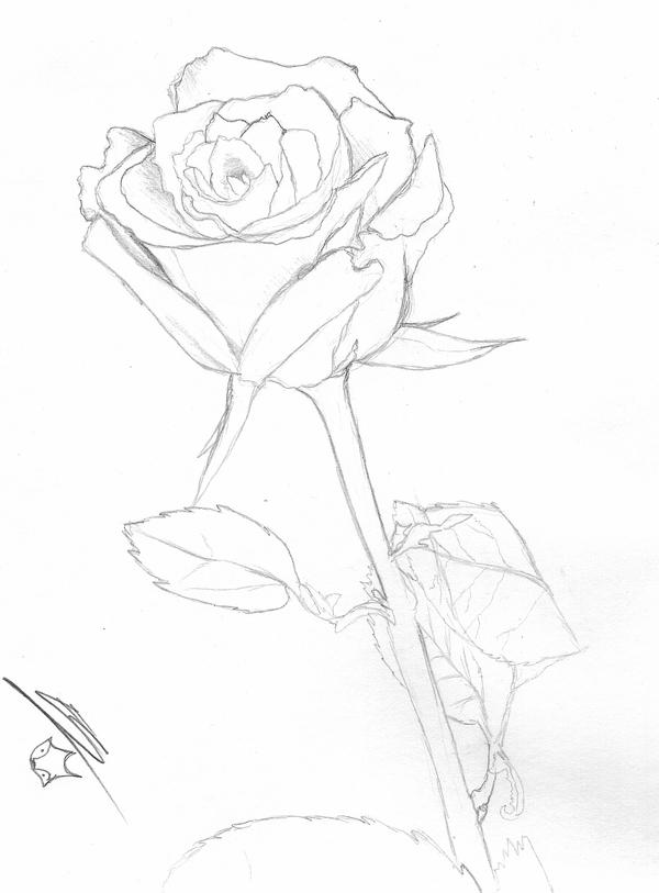 One Perfect Rose by lonesome-wolf-child on DeviantArt