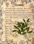 Book of Shadows: Herb Grimoire- Jasmine