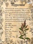 Book of Shadows: Herb Grimoire- Peppermint