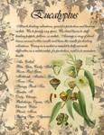 Book of Shadows: Herb Grimoire - Eucalyptus