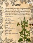 Book of Shadows: Herb Grimoire - Catnip