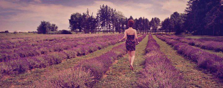 Lavender Fields Forever by Stephanie-van-Rijn