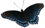 Red Spotted Purple Butterfly Precut Stock