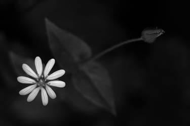 Soul... by cnv