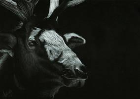 Elk by Shinigami1289