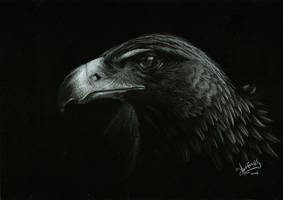 Golden Eagle by Shinigami1289