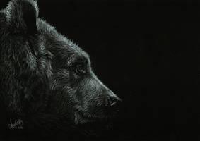 Bear by Shinigami1289
