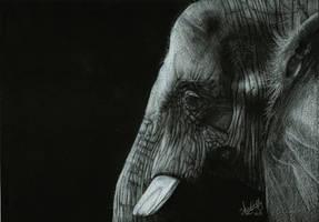 Elephant by Shinigami1289