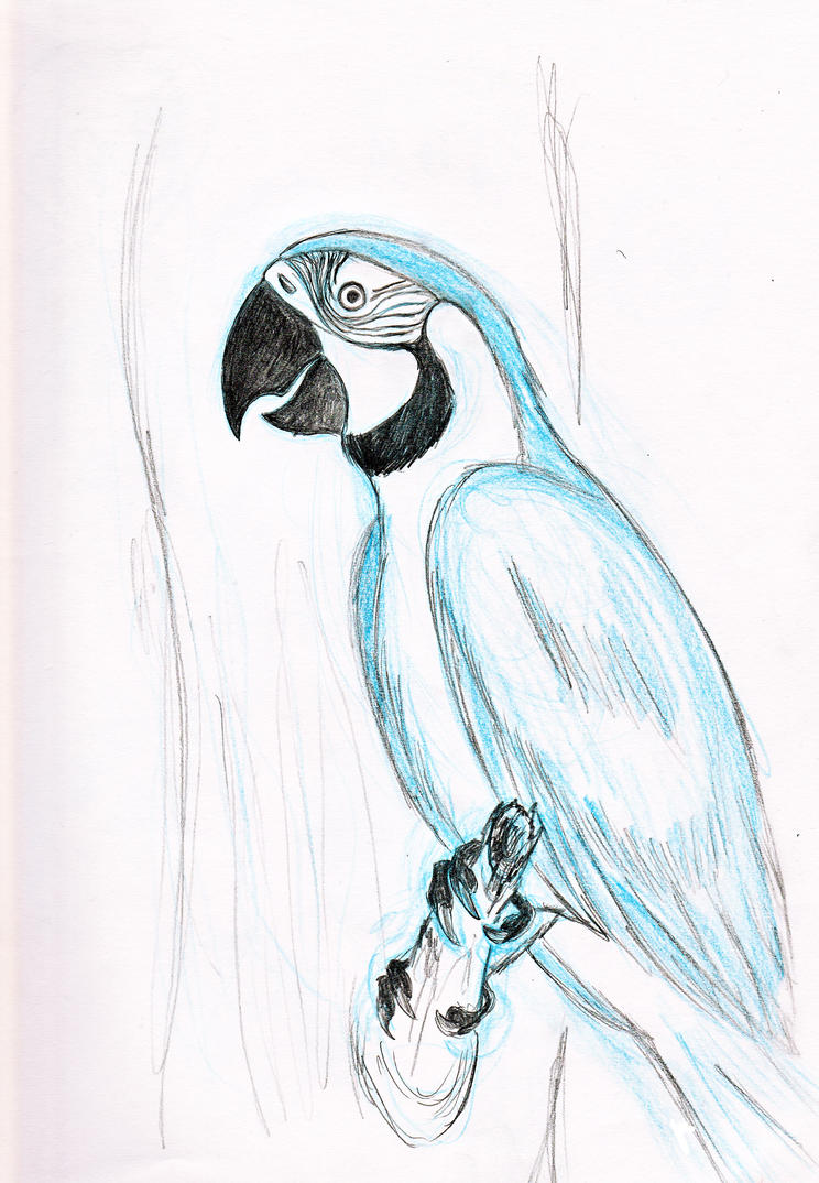 Blue Macaw Drawing How to draw macaws