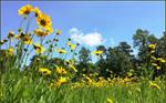 Virginia Spring