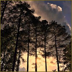Goodnight, Virginia by haloeffect1