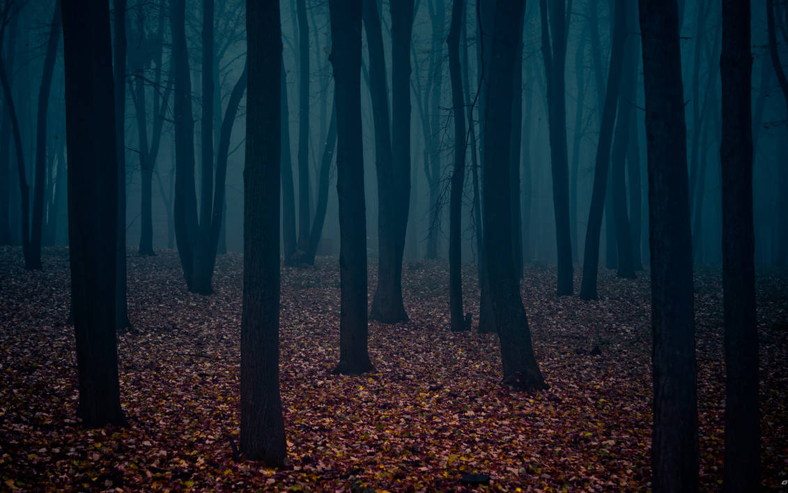 mysterious forest II