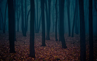 mysterious forest II by SergiumStyle