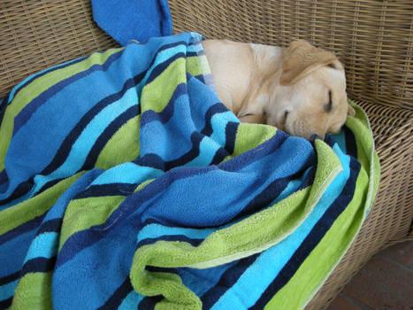 :: Kora Sleeping ::