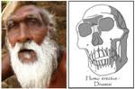 Homo erectus Dmanisi - male