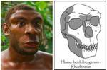 Homo rhodesiensis - male