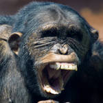 Denture australopihecines