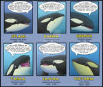 Forgotten Orcas Project 2