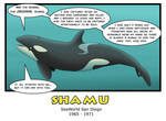 The Ultimate Forgotten Orca