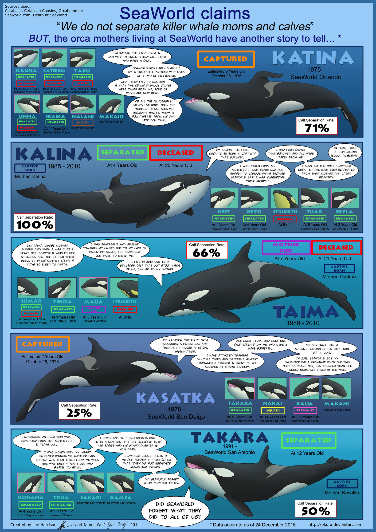 SeaWorld's Mothers and Calves by Okura