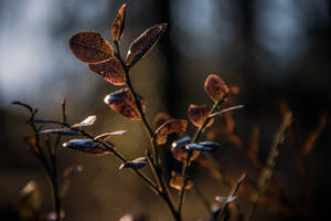 Foliage by mabuli