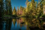 Forest creek II by mabuli