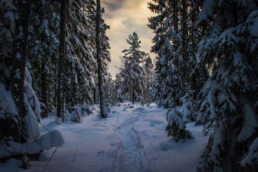 Snowy forest trail