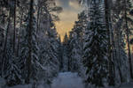 Snowy forest trail II