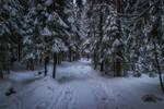 Snowy forest trail III
