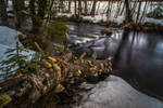 Decaying tree and stream by mabuli