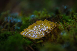 October rain II